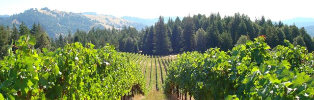 Perli Vineyard, Mendocino Ridge AVA
