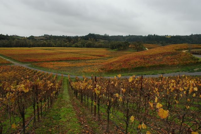 Floodgate Vineyard November 2010