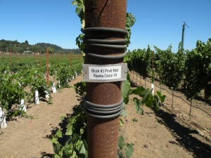 new RRV vineyard